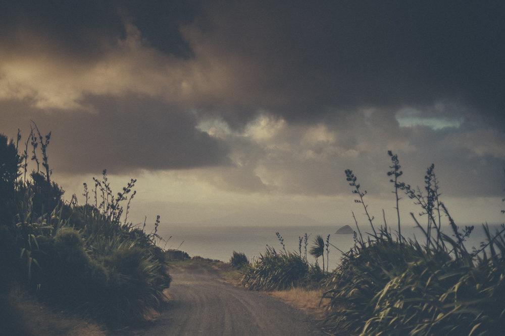 03_16_NZ_11301188