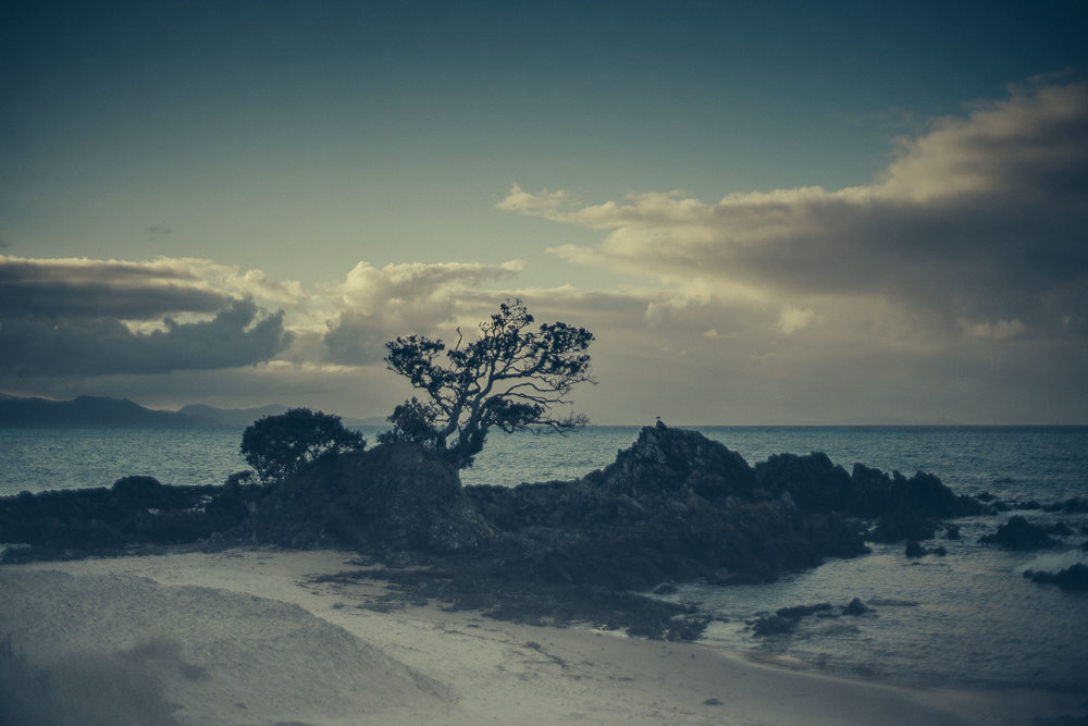 03_16_NZ_1200980